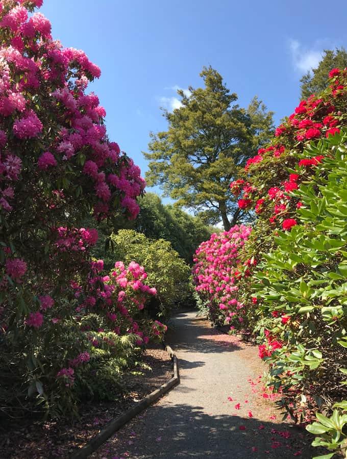 Waipahihi Botanic Gardens